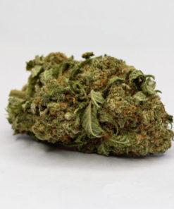 buy Pre-98 Bubba Kush strain online