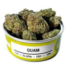buy Quam strain online
