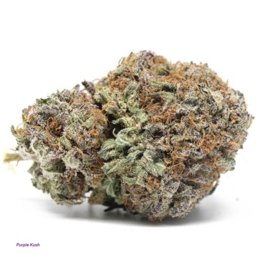 buy purple kush strain online